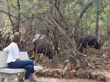 Allie and Nyala friends
